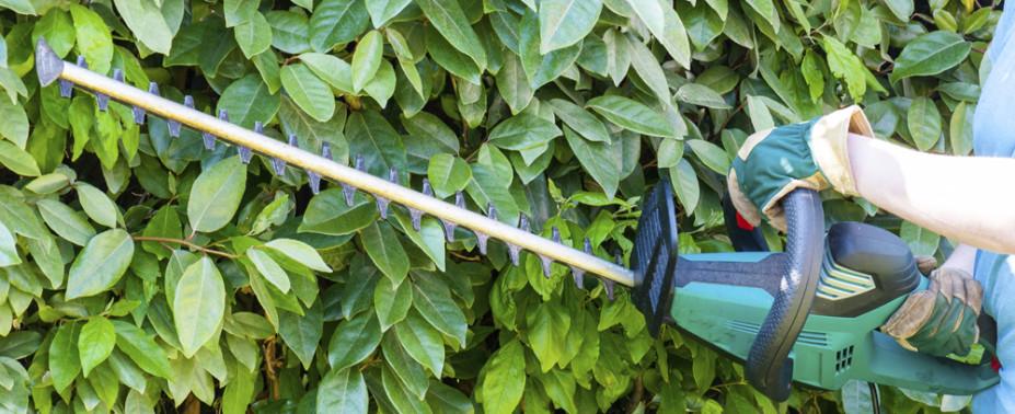 Reinhardt – Haus und Gartenübernimmt Teilbereiche, z.B. den Baumschnitt oder das Heckeschneiden, bieten Ihnen allerdings auch Komplett-Pakete mit allen Gartenarbeiten passend zur Jahreszeit und Bedarf.