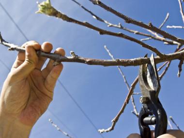 Obstbaumschnitt 2